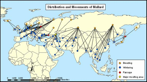 index [www.geos.ed.ac.uk] migratory bird diagram